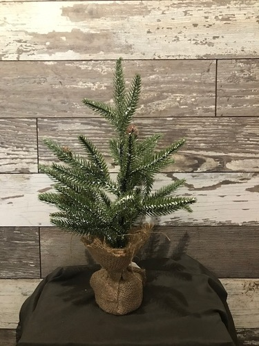 Miniature Pine Tree from Ginger's Flowers &Gifts, local Martinsburg florist