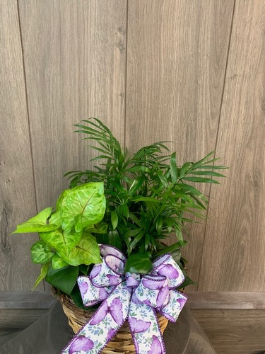 Dish Garden Basket from Ginger's Flowers &Gifts, local Martinsburg florist