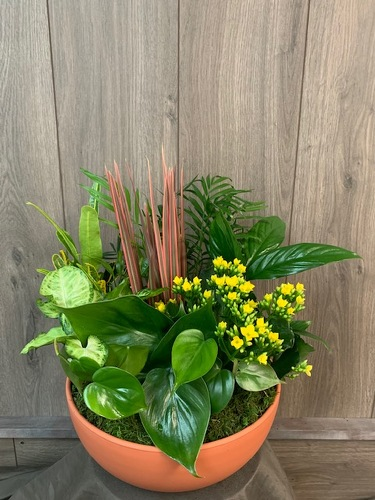 Dish Garden from Ginger's Flowers &Gifts, local Martinsburg florist