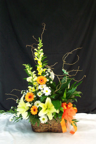 Fresh Arrangement and Plant Combo from Ginger's Flowers &Gifts, local Martinsburg florist